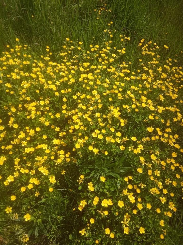 Мелкие желтые полевые цветы